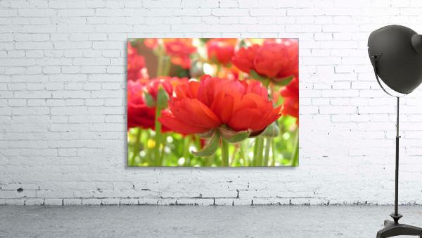 Red Rose Garden Photograph