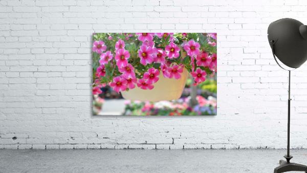 Beautiful Pink Flowers Photograph