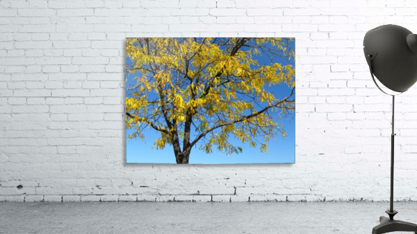 Beautiful Yellow Fall Foliage