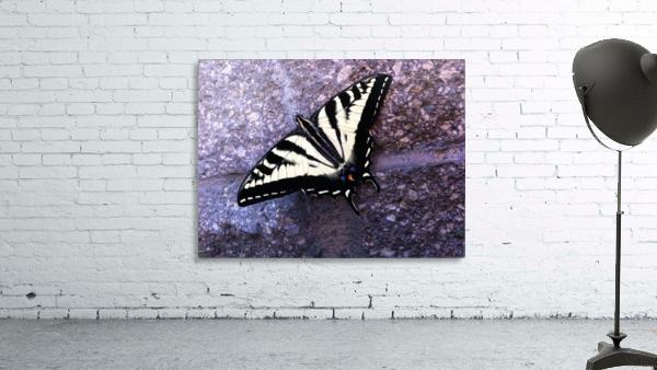Swallowtail on Stone Wall