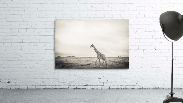 Zebrascape