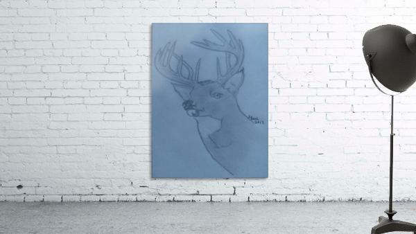 Maine Deer