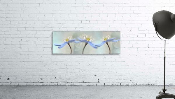 Dancing anemones