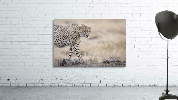 Cheetah Bro