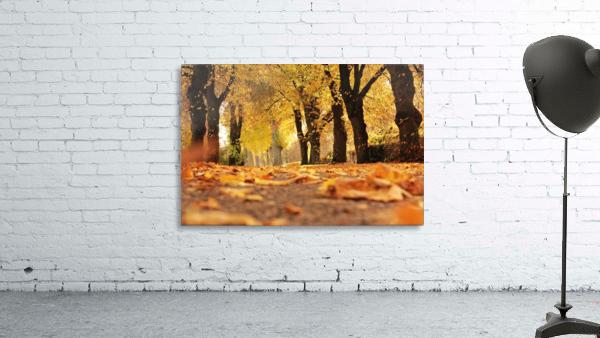 Beautiful Nature Landscape Tree Forest Trees Photography landscape photo Scenery