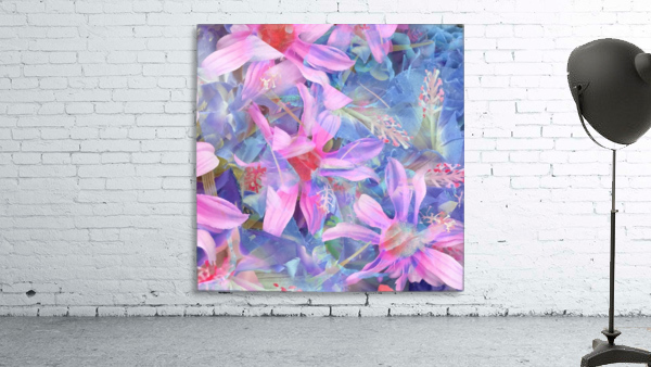 blooming pink and blue daisy flower abstract background