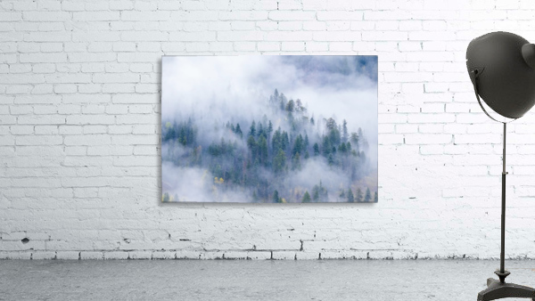 FOREST IN THE CLOUDS