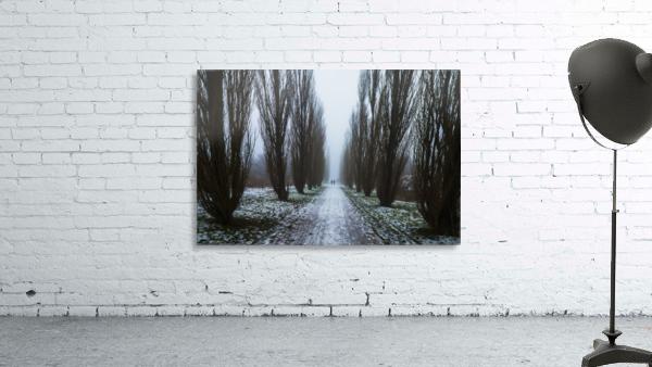 Symetric walk path in fog