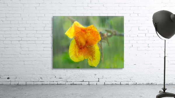Canna Lily Digital Painting 52 70 200px