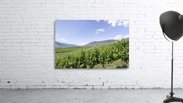 Okanagan Valley winery