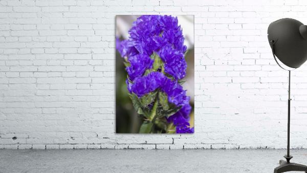 Purple Statice Flower