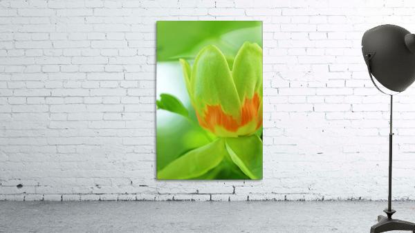 Yellow Poplar Flower