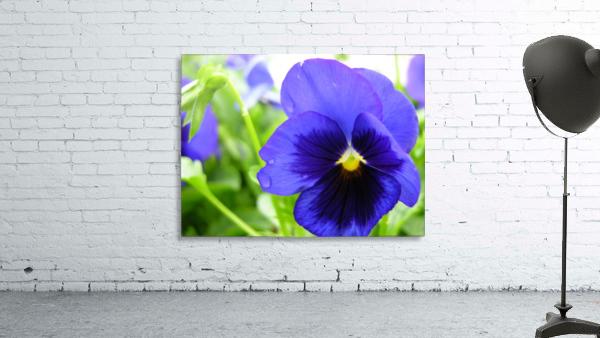 Blue Flowers Photograph