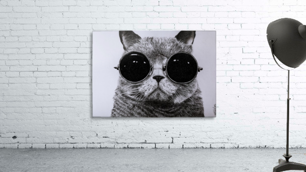 The Cat with glasses