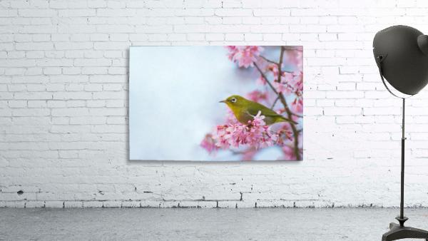 Bird In Sakura Cherry Blossom Tree