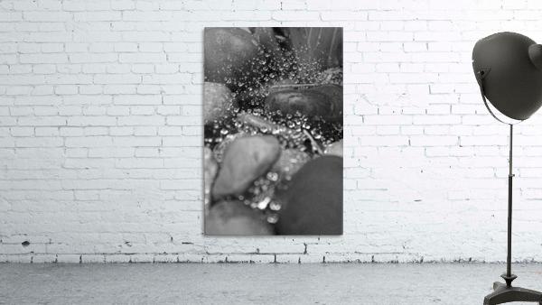 Spiderweb Raindrops B&W