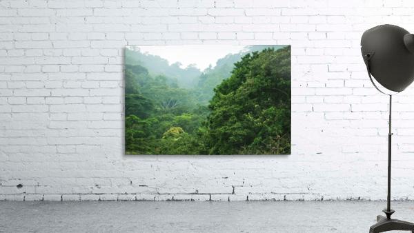 Rainforest Canopy