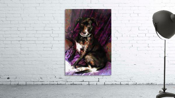 Purple Posing Puppy
