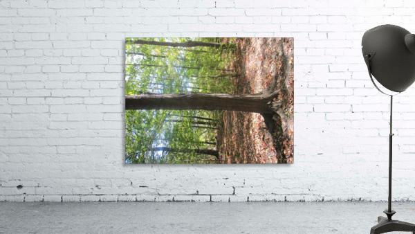 Landscape (60)