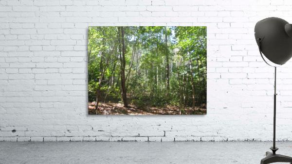 Landscape (176)
