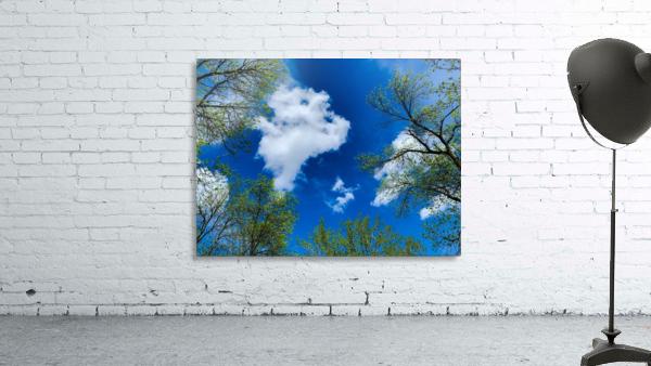 Bliss a Sky
