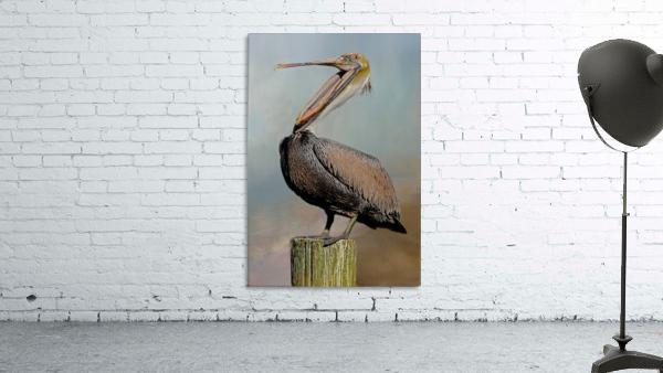 Belly Laugh-Brown Pelican