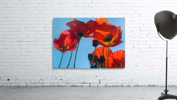 Poppies in the Sky