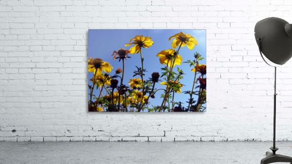 Summer Sky Flowers 1