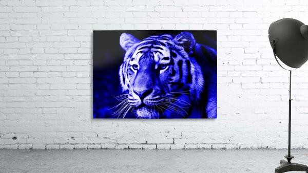 Tiger pop blue