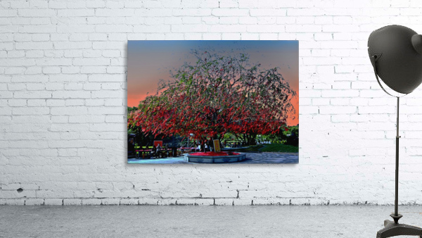 P36 - Red Red Tree