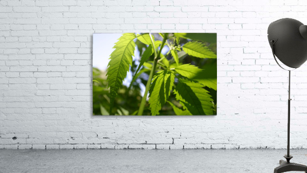 leaf with light