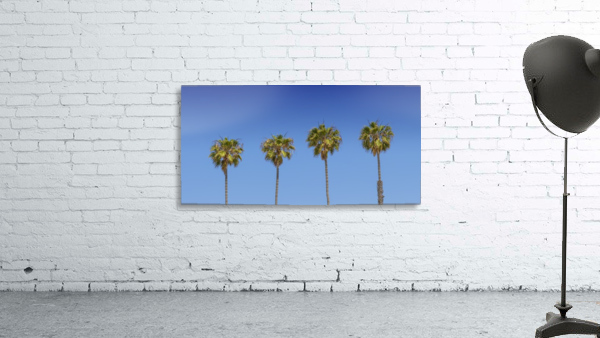 Lovely Palm Trees   Panorama