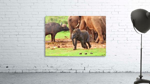 Elephant Baby 582