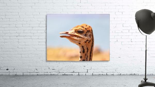 Baby Ostrich 5378