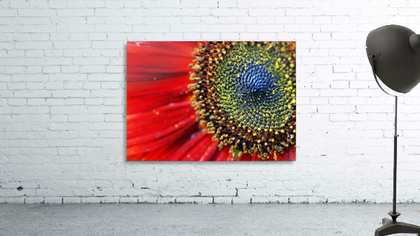 Spiral Center Of Sunflower