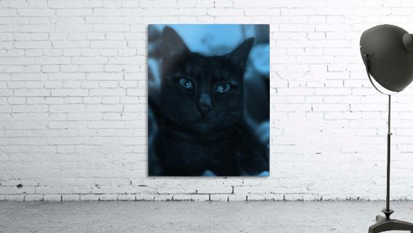 black cat in blue