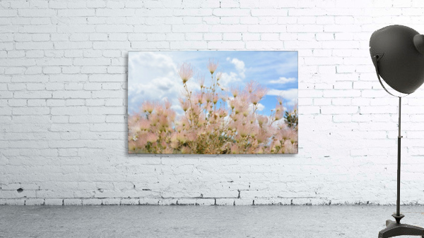 Pink Flora New Mexico Photograph