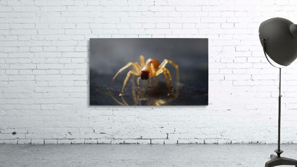 Best spider leg forward