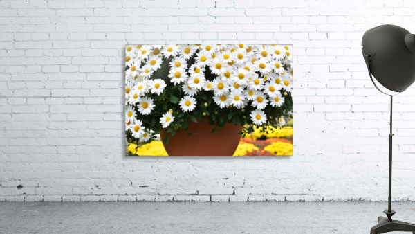 White Flowers In Hanging Pot White Flowers Canvas Print White Flowers Photograph 889