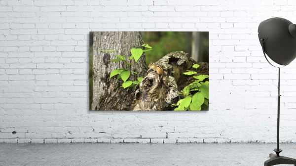 Chipmunk on tree