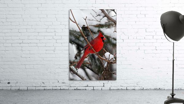 Vertical Cardinal