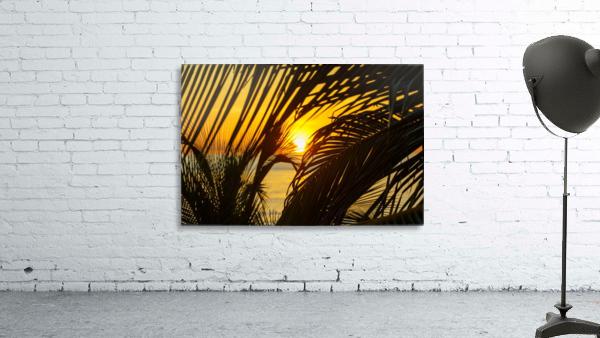 Sunrise through the palms