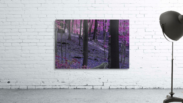 Purple Forest