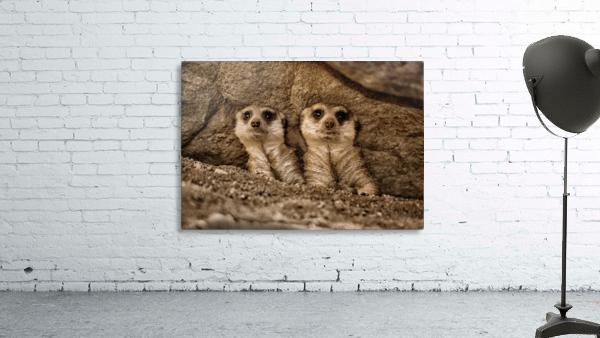 The Meerkat Twins