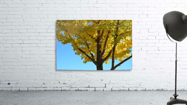 Yellow Fall Foliage Photograph