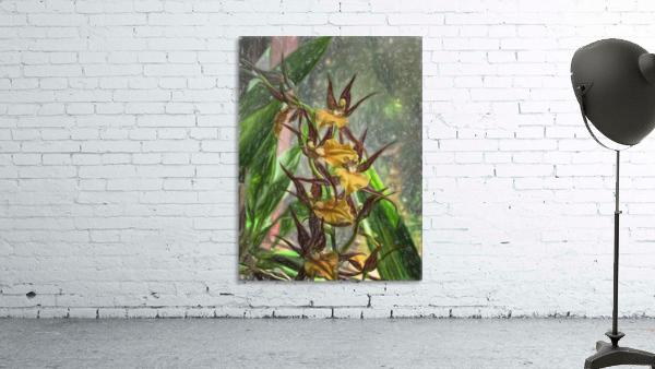 Hawaiian Orchids Color Pencil