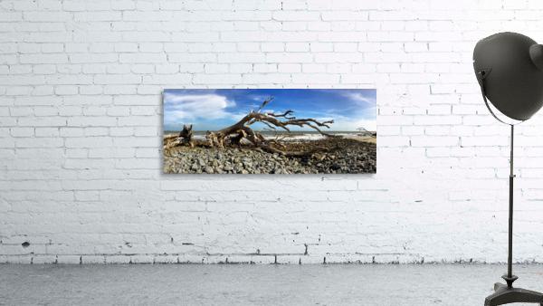 Driftwood Beach Panorama 101