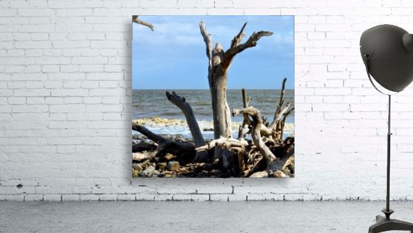 Driftwood Beach Uplifting