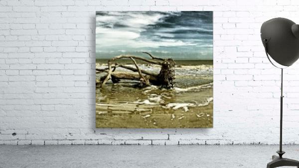 Driftwood Beach Panorama 103 Blackgold