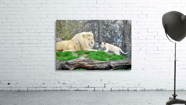 White Lion with Baby
